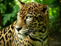 Costa Rica – The ultimate wildlife destination