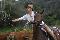 View Africa's 'big five' on horseback