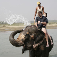 Elephant excitement in Sri Lanka