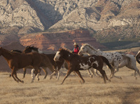 Adult-only ranching holidays