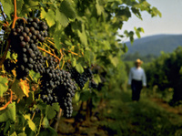Waitrose says 'zdravo' to first Slovenian Wine