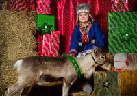 Lottie Sweet, 11, with one of her reindeer