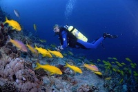 BOGOF diving offers in the Red Sea