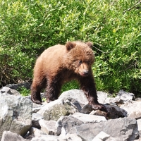 Put your best paw forward – walking with bears in Slovakia