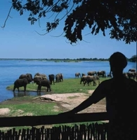Escape the royal wedding to Zambia