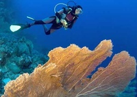 Dive with a buddy in Sharm and save
