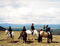 Horse riding breaks in North Wales