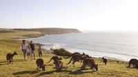 Enjoy a taste of South Australia with Qantas Holidays