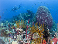 Experience Dive Fest in Dominica