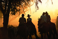 Kimberley Heritage Cattle Drive