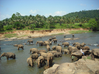 Discover Sri Lanka fifteen-day tour