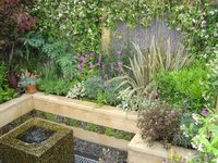 Picture Caption:  Effect planting can transform your Garden (picture by Jamie Dunstan)