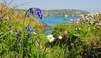 Guernsey - A year in wildflowers