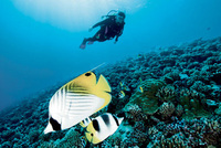 Dive season returns to Tanjong Jara Resort