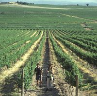 Wine, dine & walk tours in Spain's top wine regions