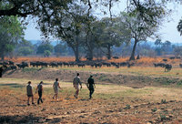 Walking holidays in Zambia
