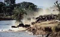 Kenya welcomes the Great Wildebeest Migration