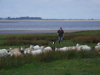 Solway Salt Marsh Lamb stocked at Cranstons