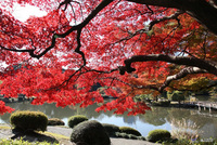 Explore Japan's autumnal blaze of glory