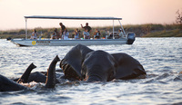 New photographic safari takes your lessons outside, in Botswana