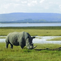 Celebrate World Rhino Day with Acacia Africa