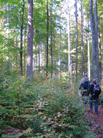 Walking wonderland in the Bavarian Forest