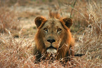 Gorongosa: Explore Africa's hidden Eden