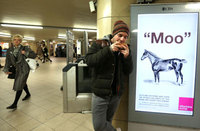 Artist stirrups horse meat controversy