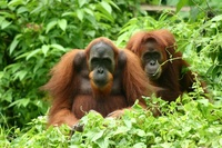 Wonders of Sumatra and Java
