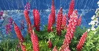 Head to Ireland's top garden show: 'bloom' opens 30 May