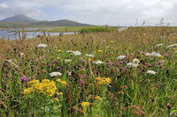 Wildlife breaks in the Outer Hebrides the 'Islands on the Edge'