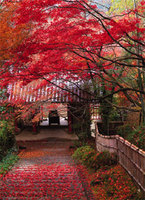 Experience Japan's autumnal glory on a garden tour