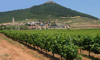 Celebrate the Rioja wine harvest In Logrono