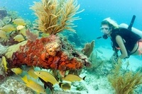'Wreck Trek' dive initiative showcasing Florida Keys shipwrecks extended