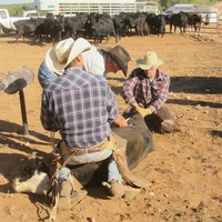 Branding at the Creek Working Ranch in New Mexico