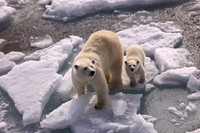 Arctic destinations a top holiday pick for 2014