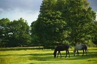 Guided walks with the former Chief Forester of the New Forest