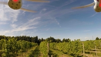 Glass half full for wine growing industry as technology lends a hand
