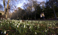 Scotland's Snowdrop Festival: where to go, where to stay
