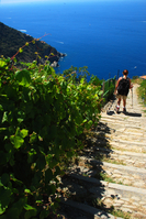 New trail running race launches through the vineyards of the Italian Riviera