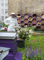 Urban bee keeping workshops