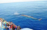 Whale watching family holiday this Easter in Italy
