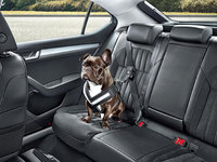A mutts-have this summer: The dog safety range from Skoda