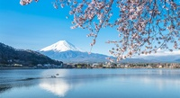 Top Five: Places to view Japan's iconic cherry blossom